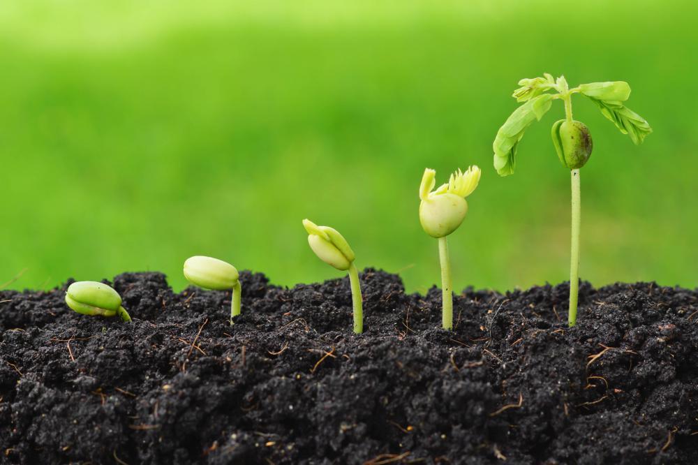 seeds-green